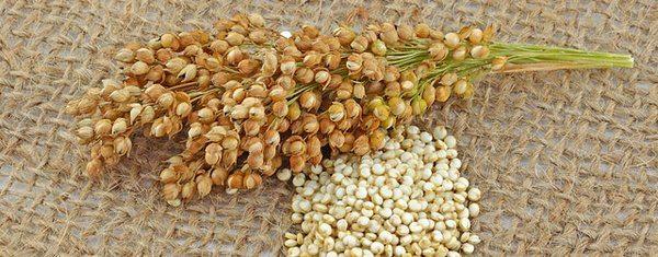 hat-diem-quinoa